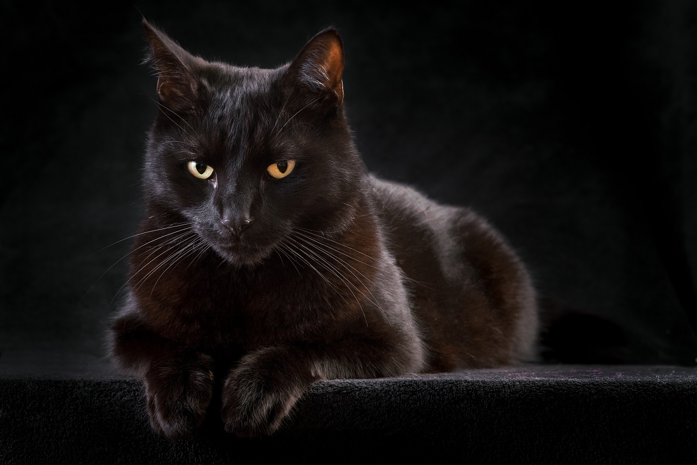German Superstitions Cats